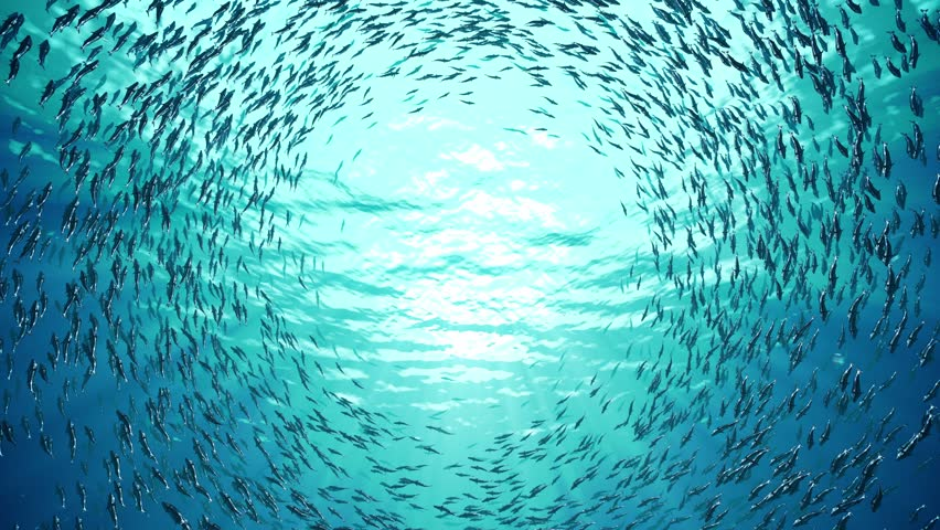 School of fish | Shutterstock HD Video #9743549