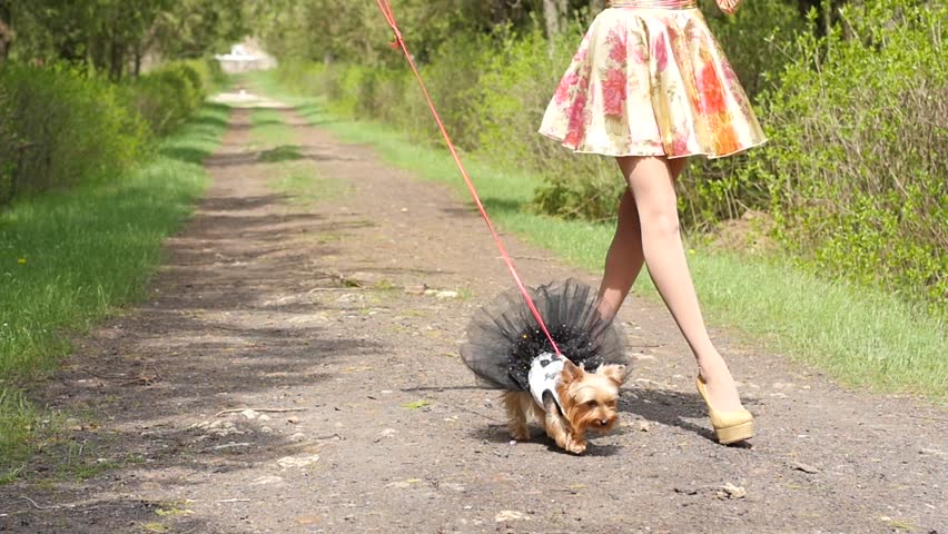 Sexy Slim Legs Young Brunette Girl Walking With Dog In Park Stock Footage Video -8934