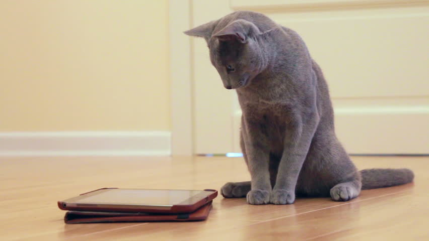 Kitten playing with tablet pc