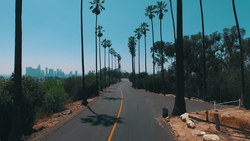 Skater /  Long-boarder Rides Through Palm Trees Overlooking Downtown Los Angeles